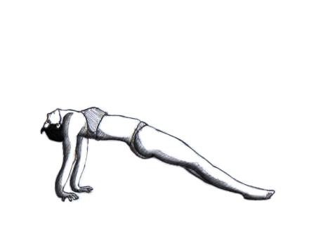 personal trainer  bhasinsoft  weight training